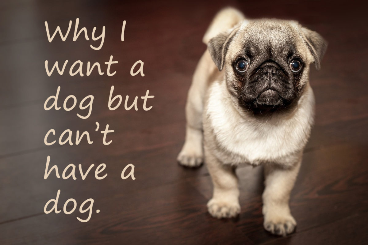 why people want to have pets Why do people have pets according to a 2011-2012 national pet owners survey, 729 million families in the united states have one or more pets.