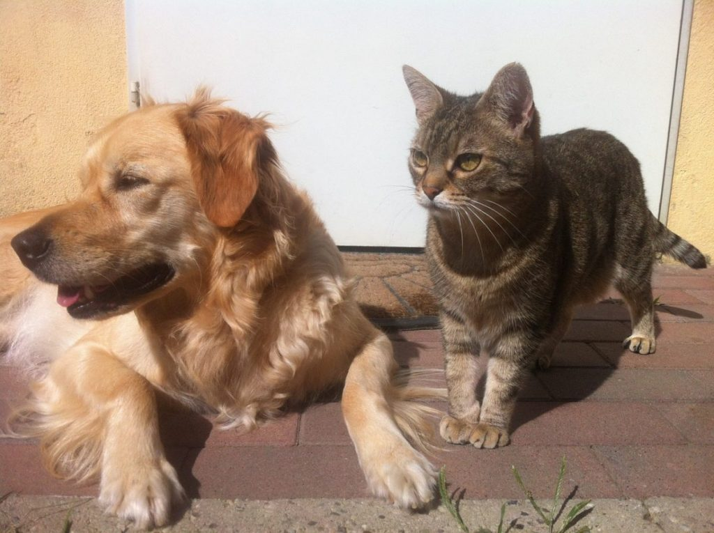 Dog and cat lying down