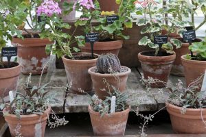 Pots of succulents and plants on a table in the glass house at Clumber Park National Trust Property