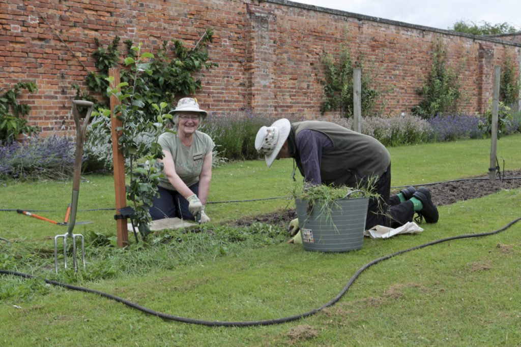 A male and female gardener on their knees tending the weeds in the borders of one of the areas of the walled garden (a wall is behind them) at Clumber Park National Trust Property