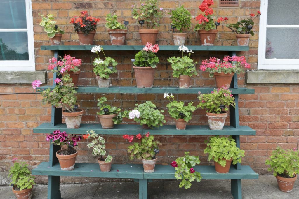 The Plant Theatre in CLumber Park Walled garden. Rows of potted plants on stair like shelves that are against a brick wall. The display changes from time to time to showcase different plants and flowers.