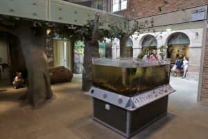 A view of the fish and amphibian tank and the interior of the Discovery Centre at Clumber Park National Trust Property