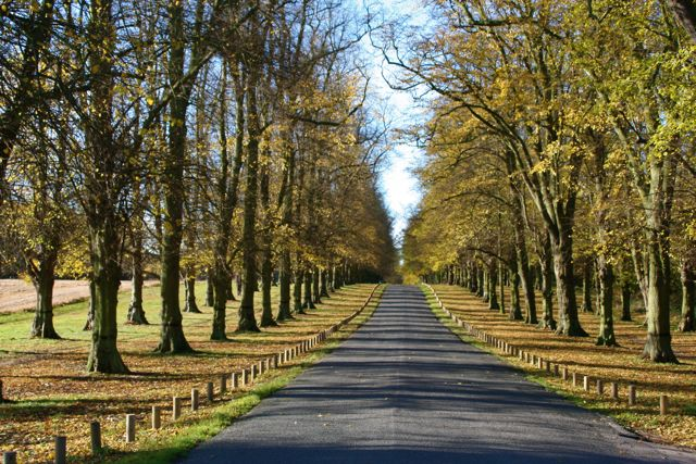 Lime Tree Avenue at Clumber Park National Trust Property