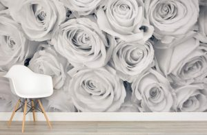 Rose Mist Wall Murals