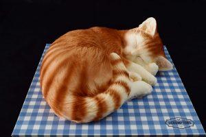 Scrumptons Cakes Cat