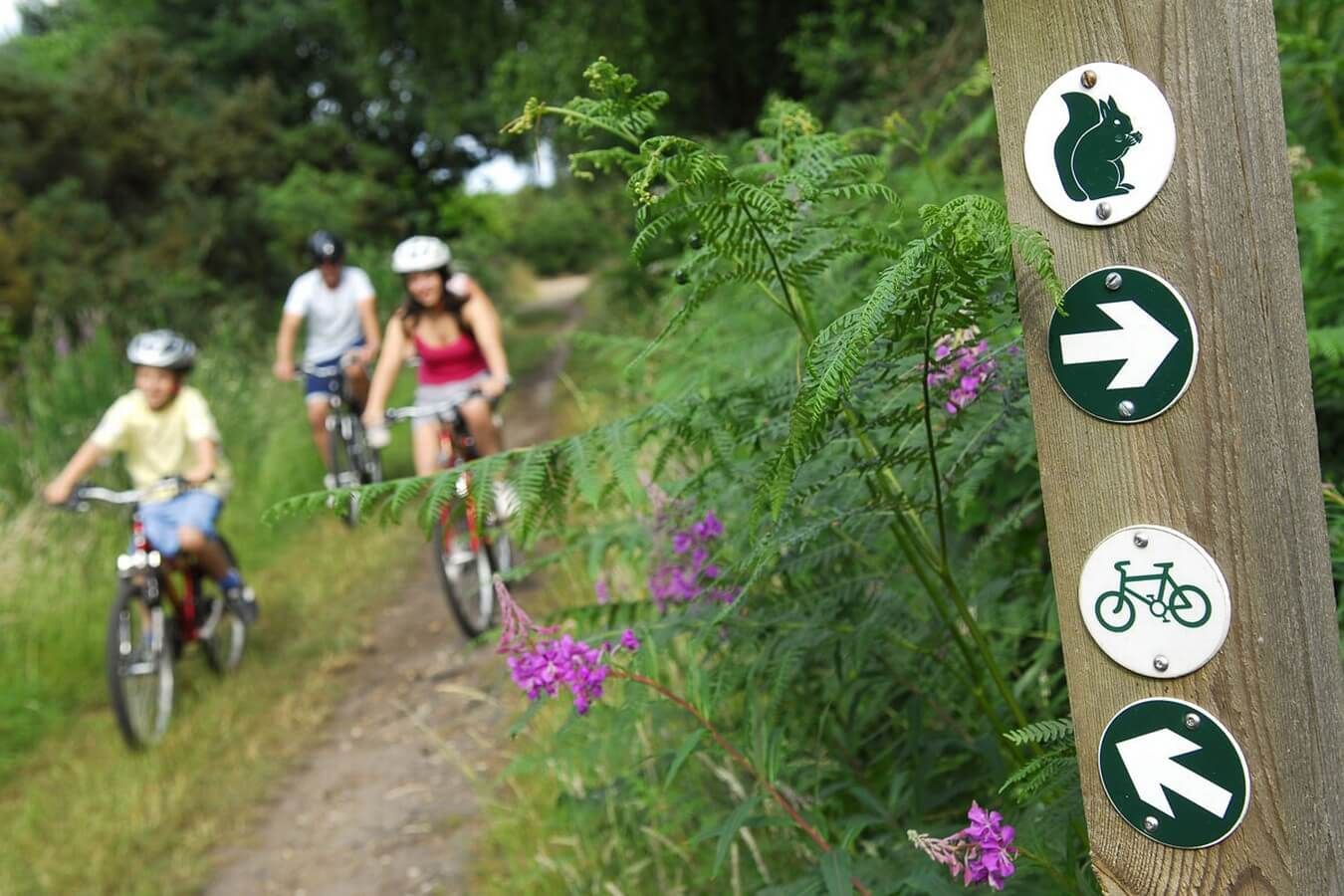 Cyclists on Cycle trails and routes at Kelling Heath.